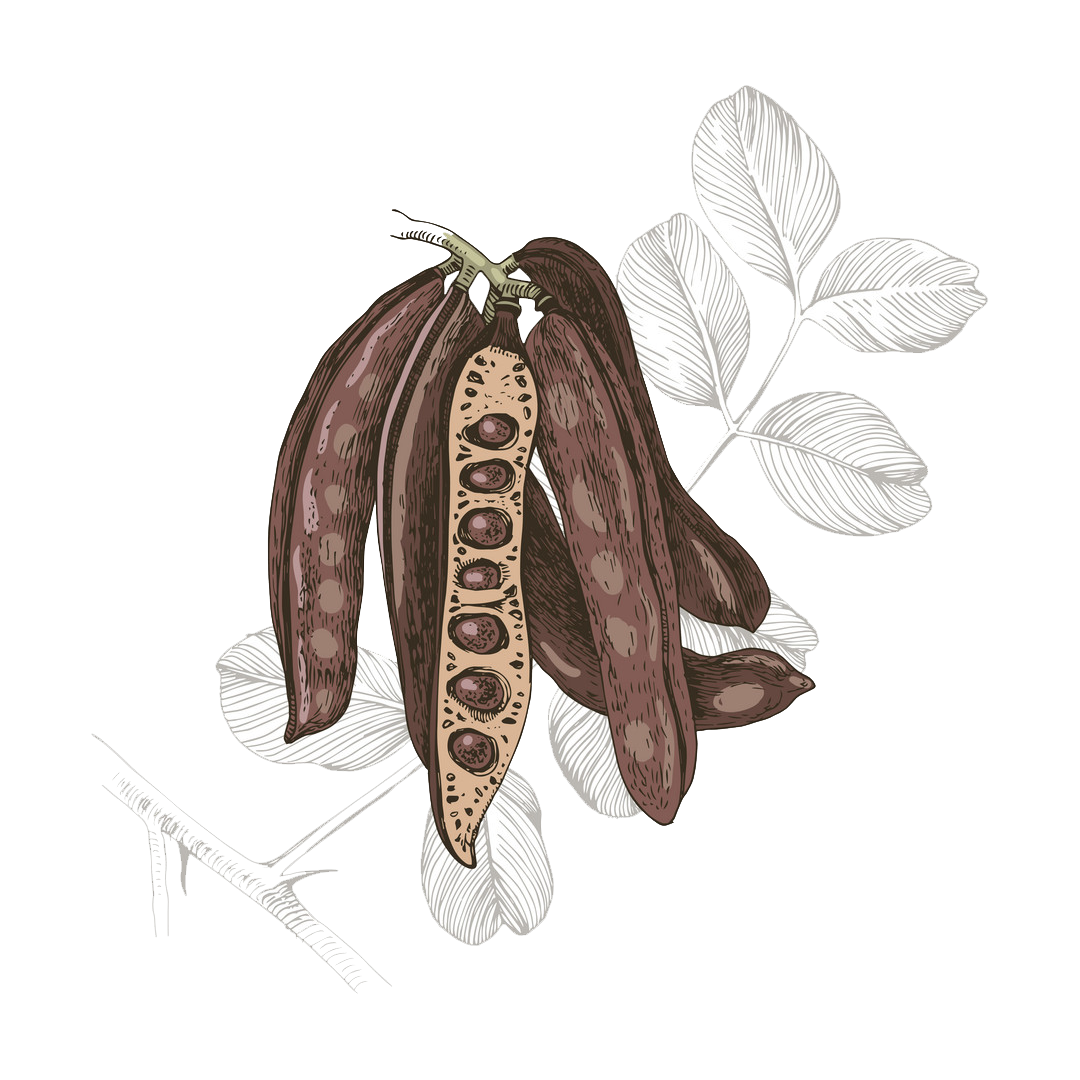 What is Carob? Learn More About Carobs   Australian Carobs